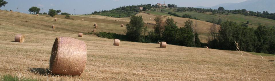 Agriturismo in campania